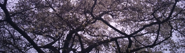 cropped-tree21.jpg